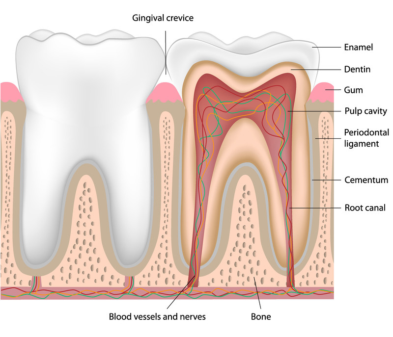 Root Canal Therapy Columbus OH